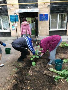 Садовая терапия для пациентов